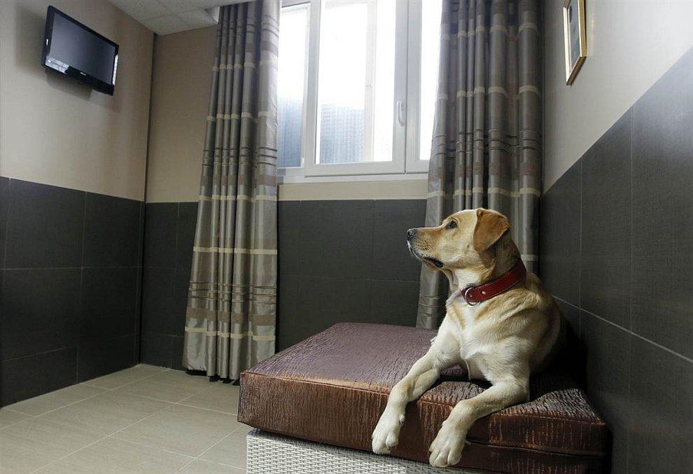Недалеко от Парижа открылся новый собачий отель