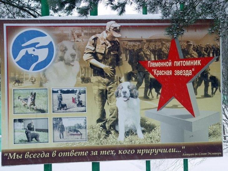 Военный кинологический центр «Красная звезда»