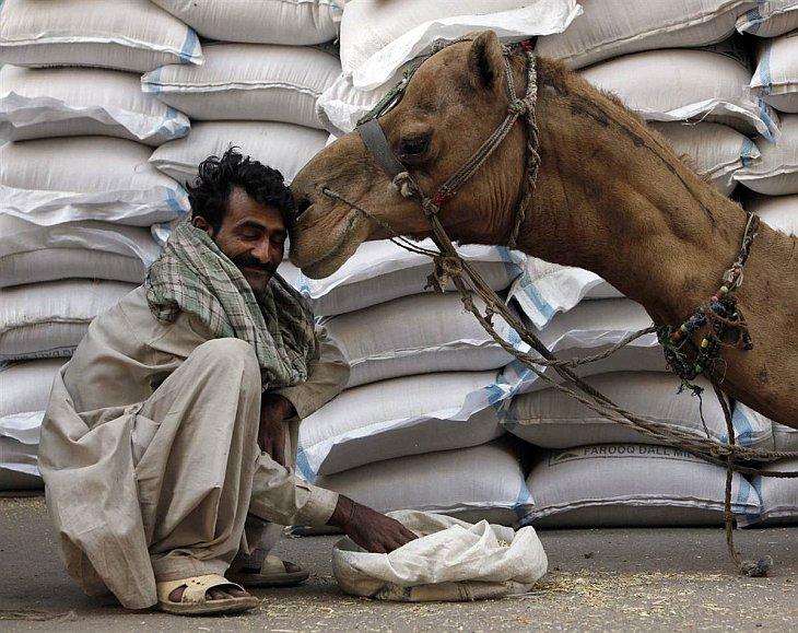Животные в фотографиях за неделю (7 — 13 февраля 2011)
