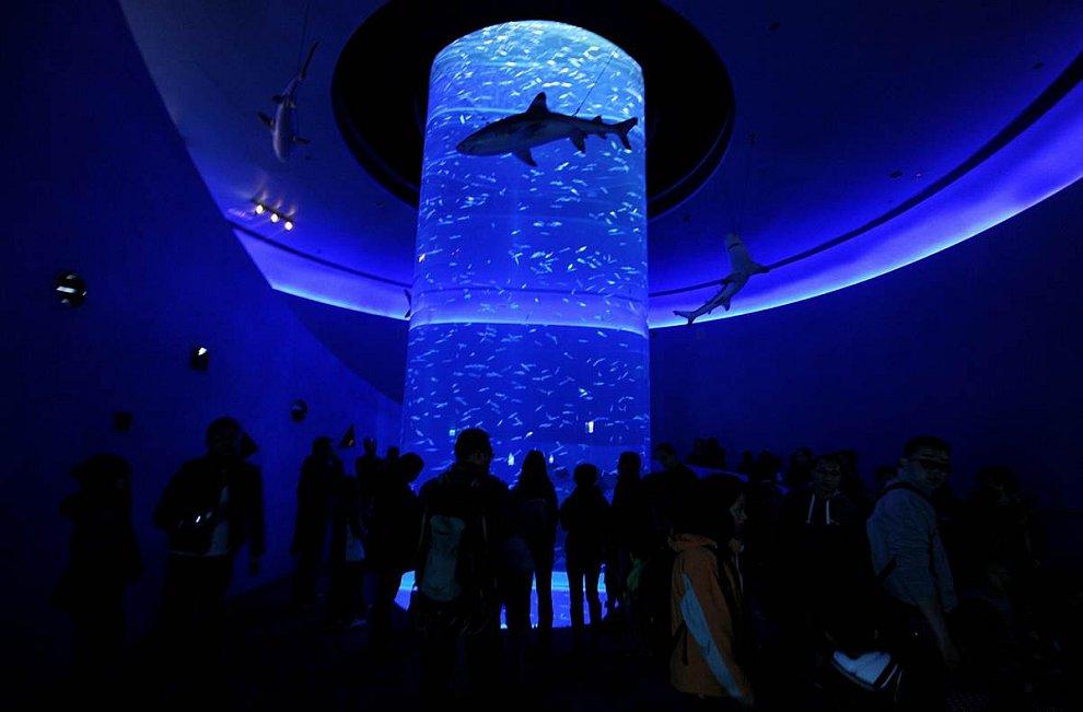 Роскошный новый аквариум в Гонконге