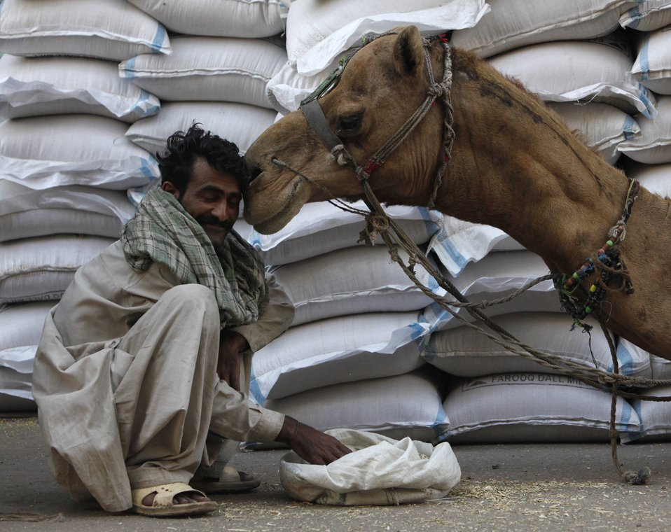 Рабочий и его верблюд на оптовом рынке в Карачи
