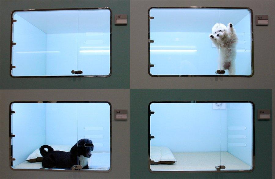 В Сеуле открылся роскошный отель для собак