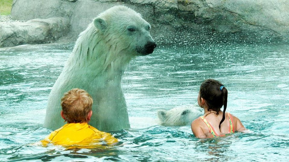 Центр по сохранению белых медведей в Кокране