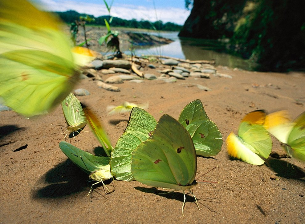 Butterflies on the shore