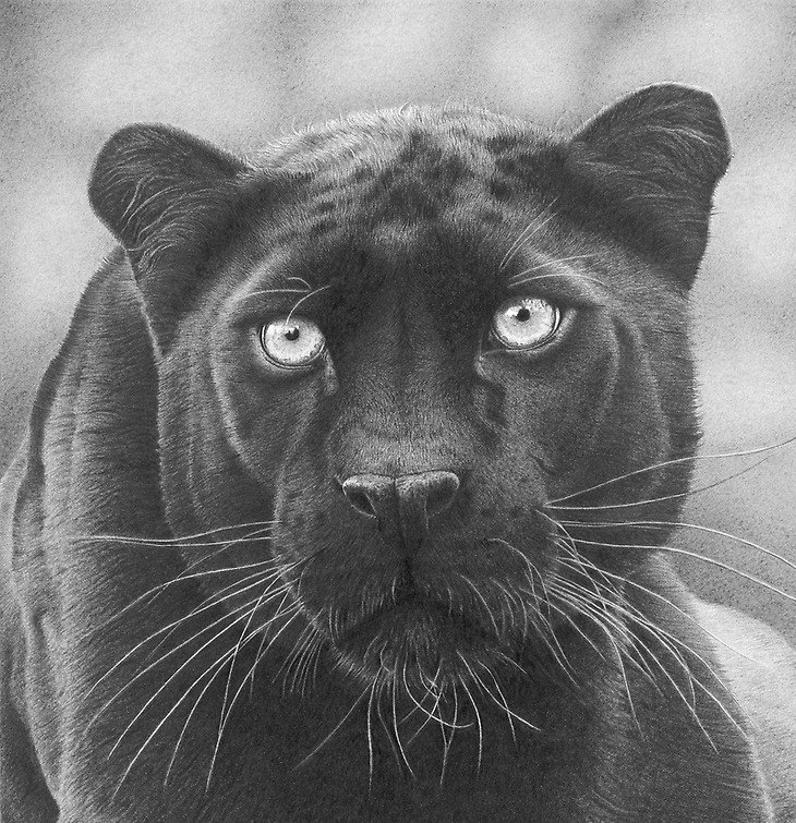 The grace and beauty of animals in graphite