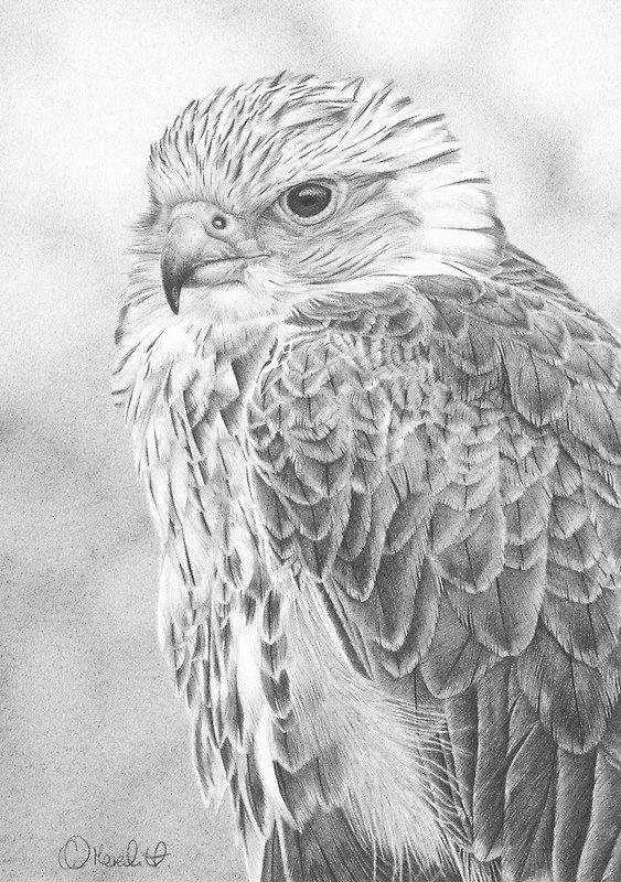 Балобан - хищная птица семейства соколиных