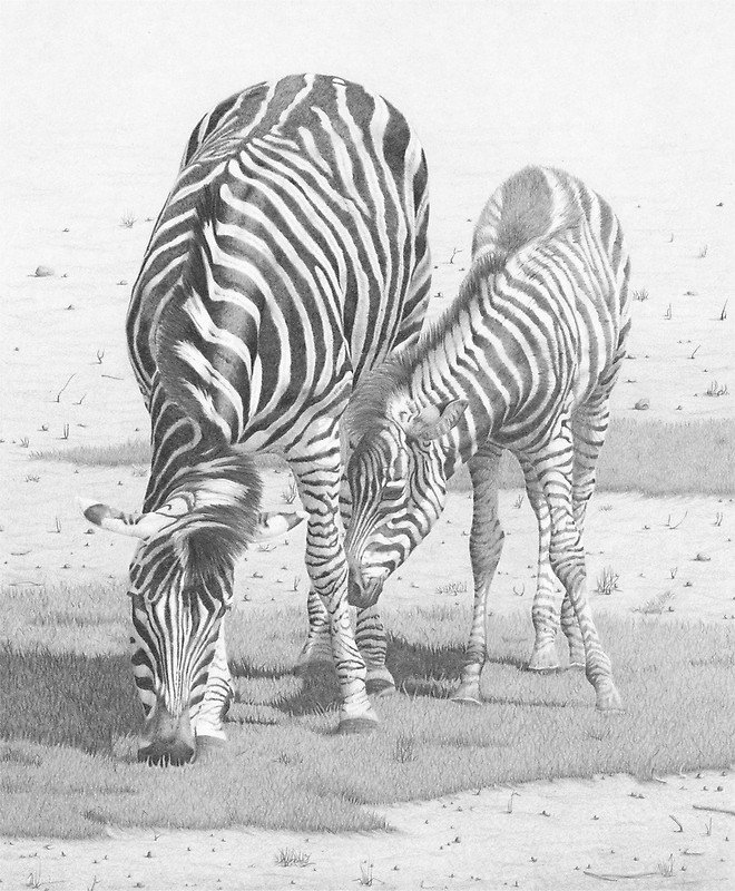 Zebra and foal