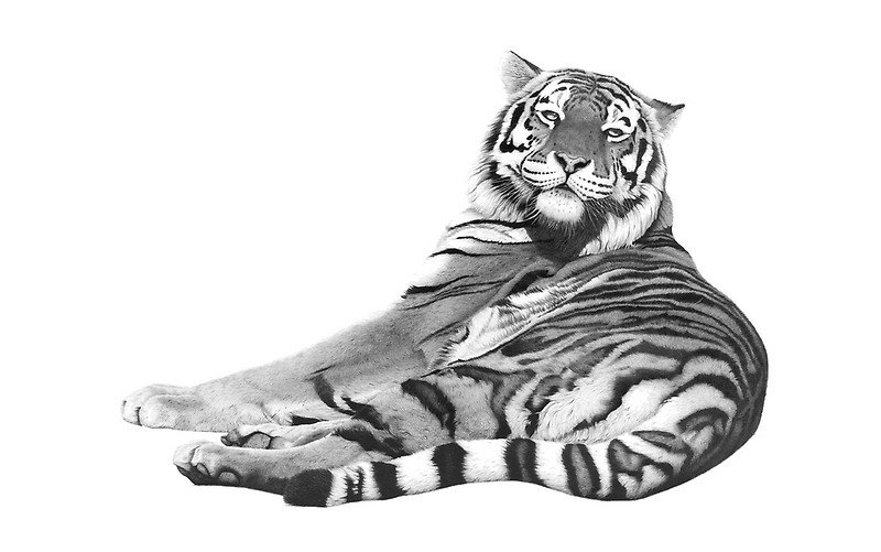Сибирская тигрица