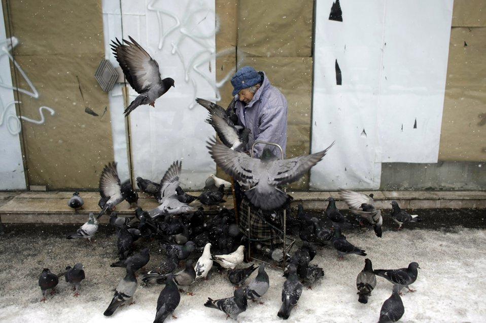 Бабуля кормит голубей