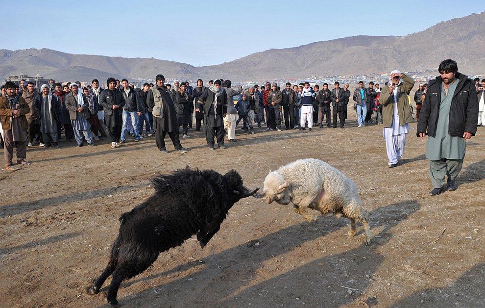 Афганистан в январе 2011