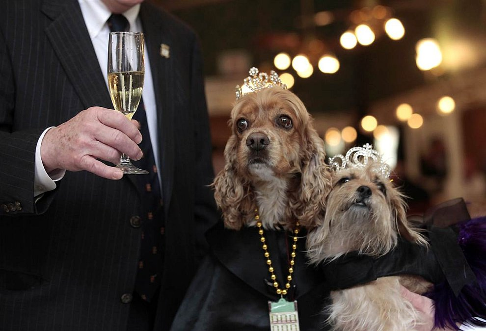 На костюмированном параде для собак в Новом Орлеане выбрали короля и королеву