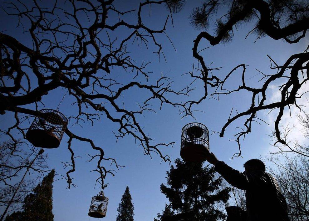 Клетки для птиц на деревьях в парке Пекина
