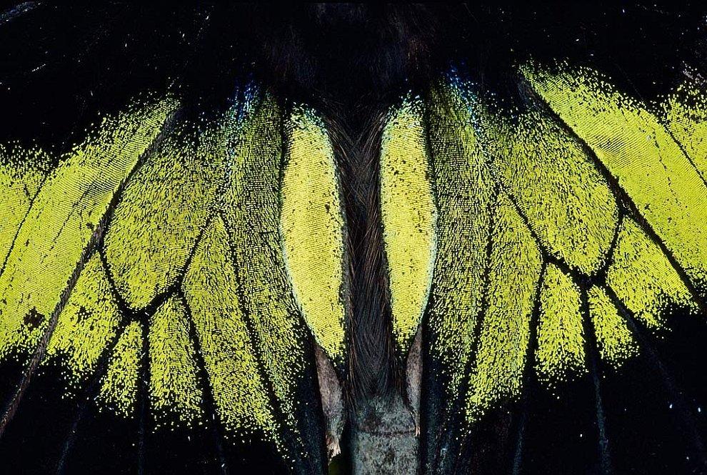 Крылья мотылька