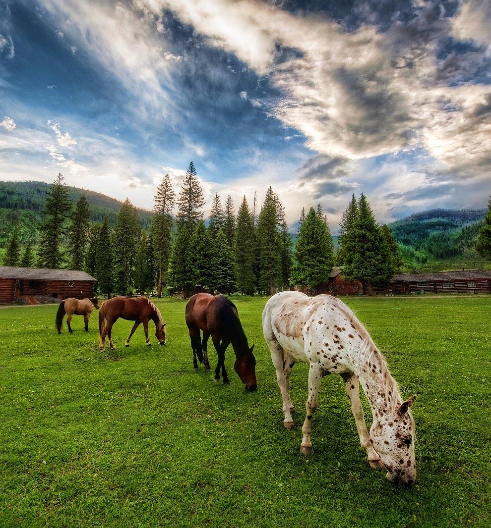Лошади на лугу
