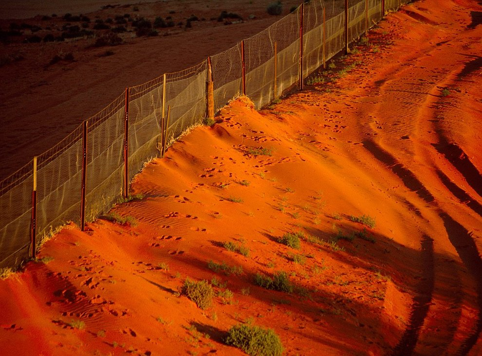 Dingo fence against