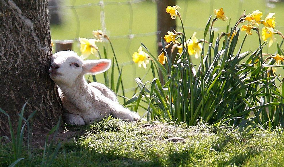 Наступила весна
