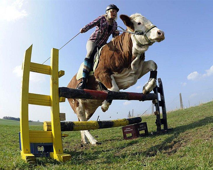 Животные в фотографиях за неделю (4 — 10 апреля 2011)