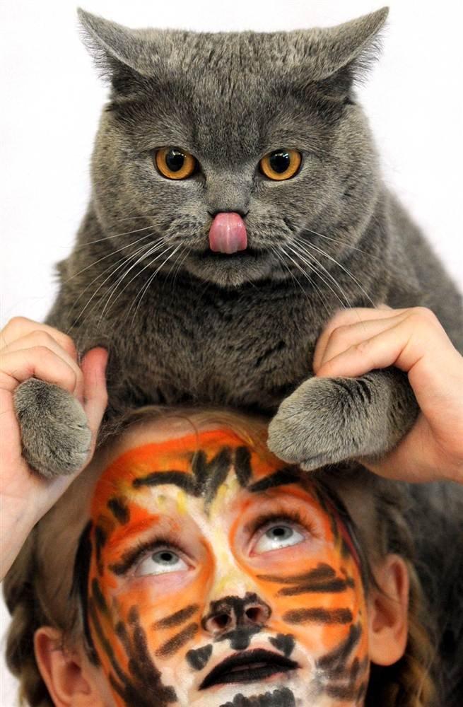 Международная выставка кошек в Минске