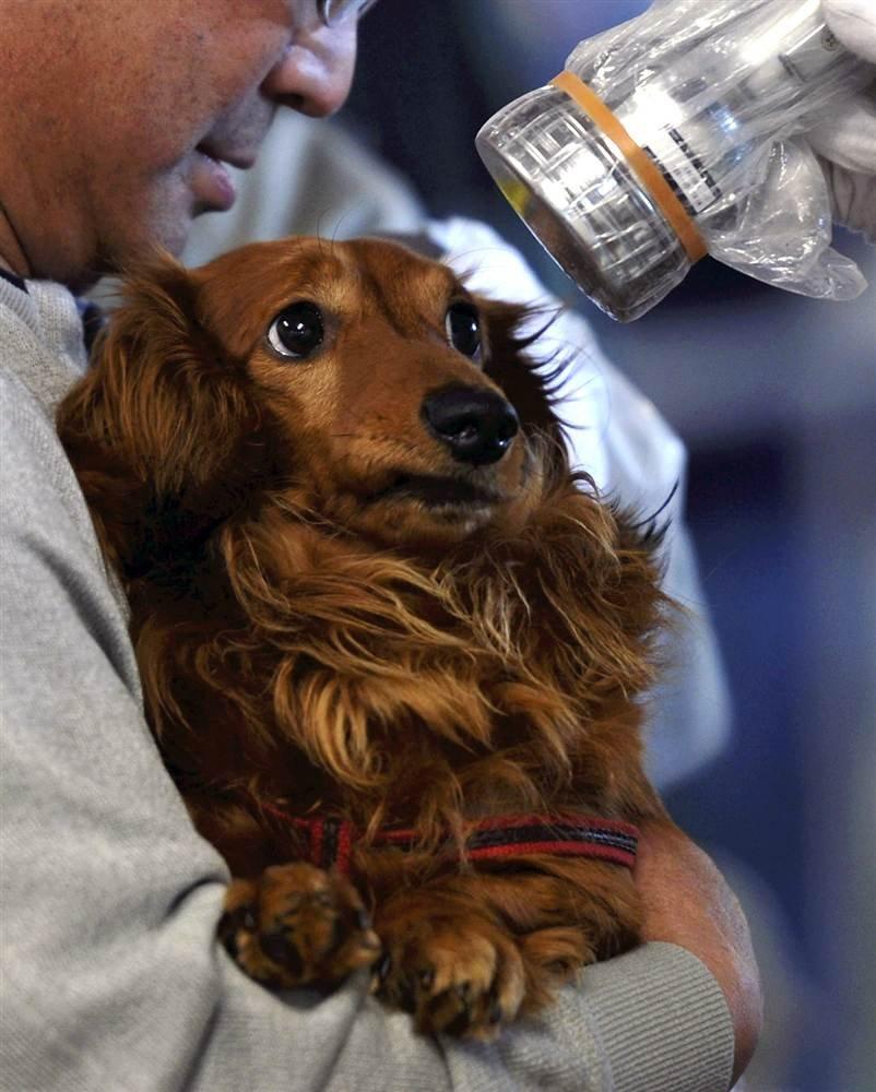 Хозяева нашли свою собаку после разрушительно землетрясения в Японии