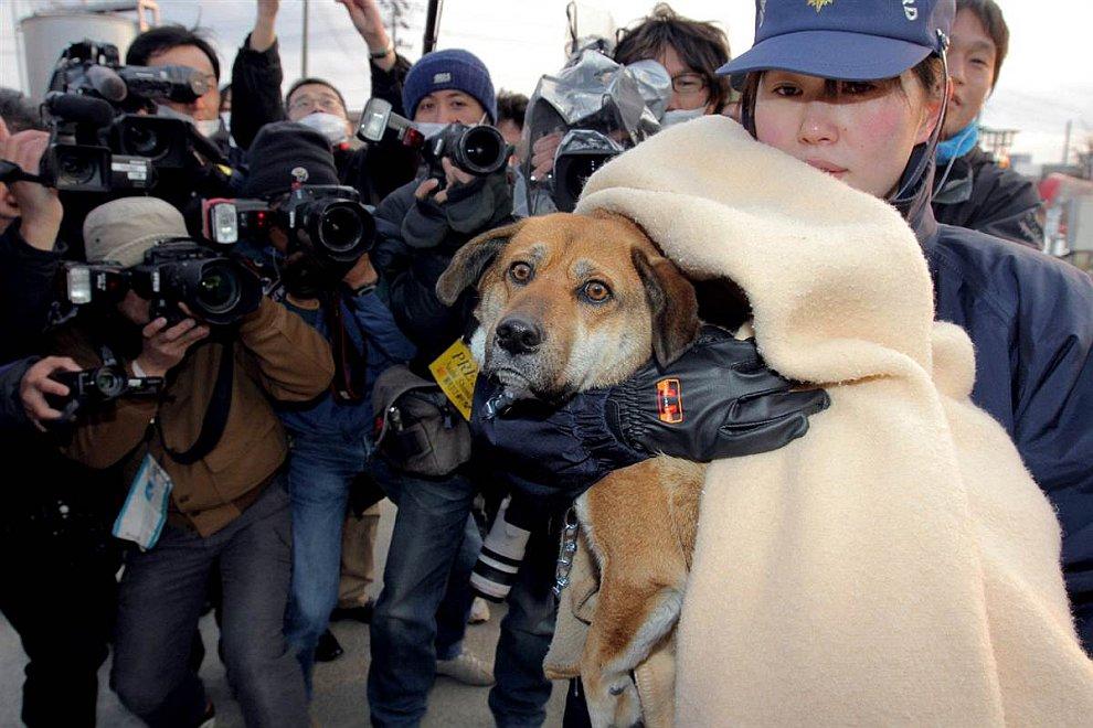 Этого пса спасла береговая охрана Японии