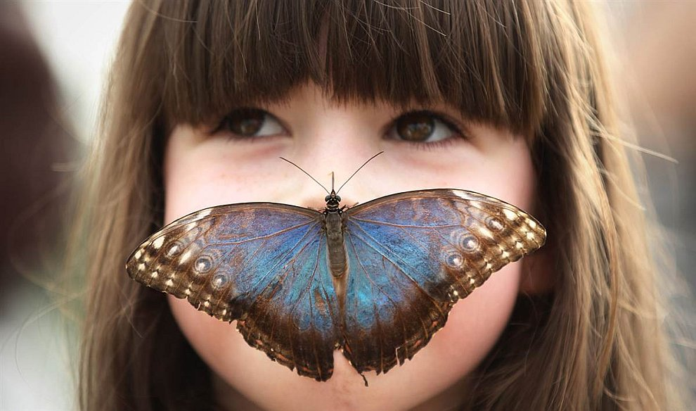 В музее Лондона проходит выставка «Удивительные бабочки».