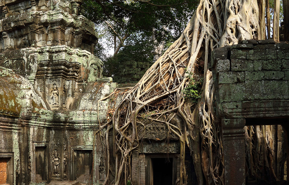 Cambodian temple Ta Prom (Ta Prohm) and giant trees