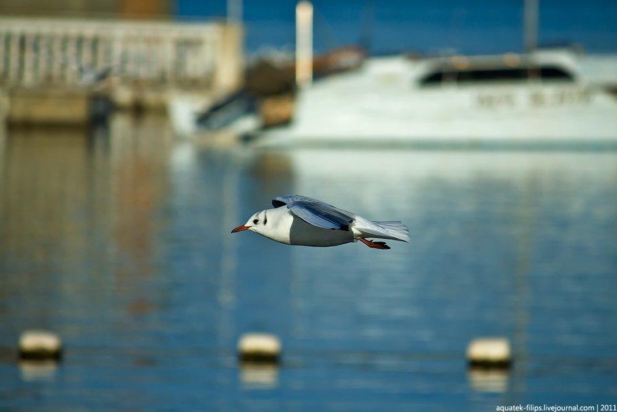 Птицы: рожденные летать