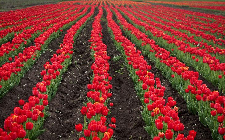 В мире цветов новые фото