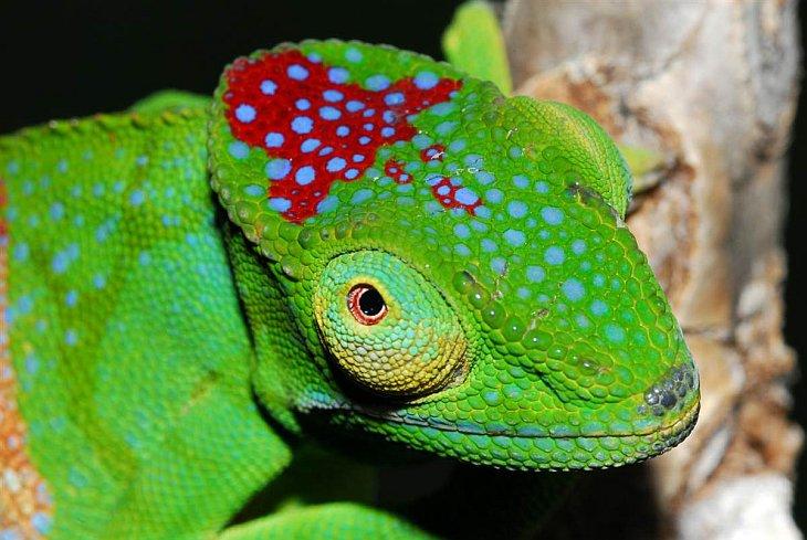 Чудеса Мадагаскара: новые виды животных