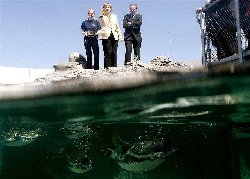 Ангела Меркель кормит пингвинов