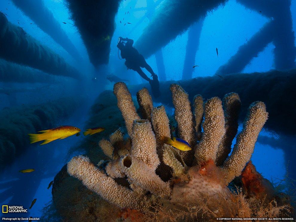 Подводный заповедник Flower Garden Banks