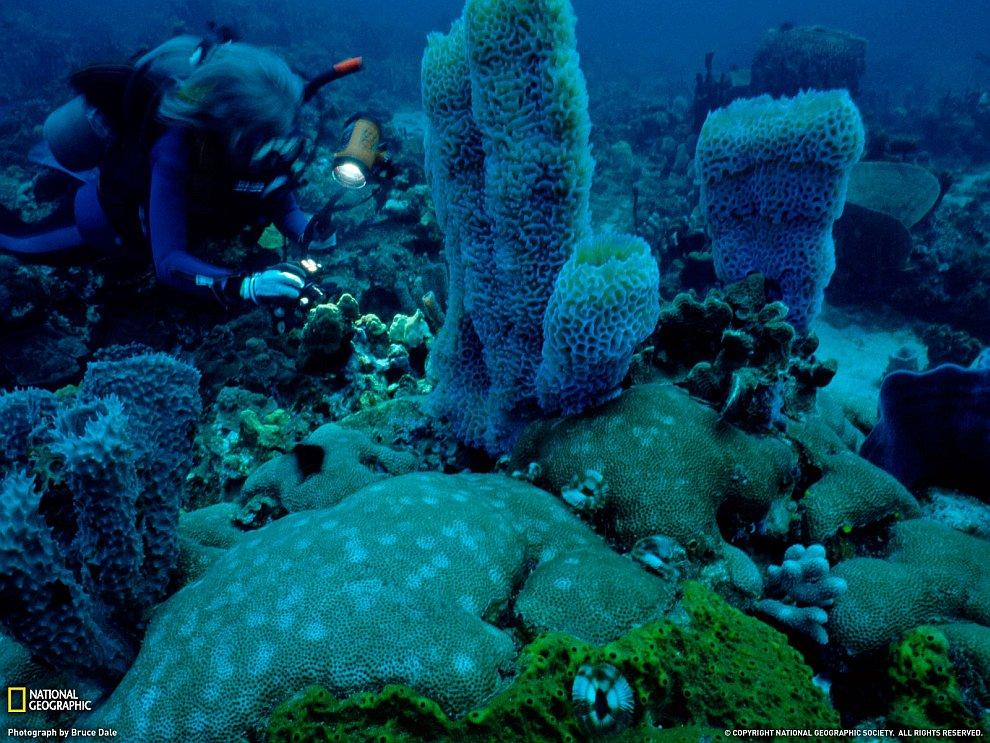 Коралловый сад на острове Доминика