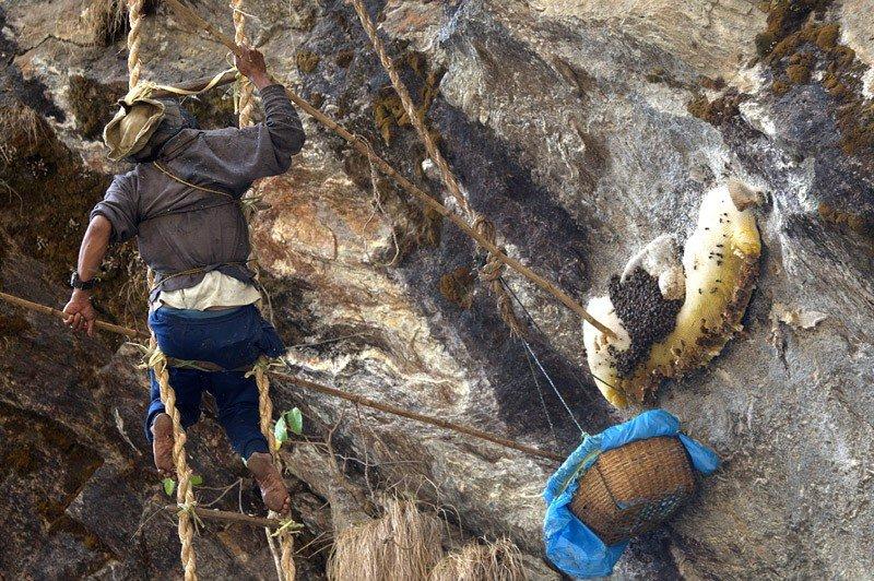 Охотники за медом в Гималаях