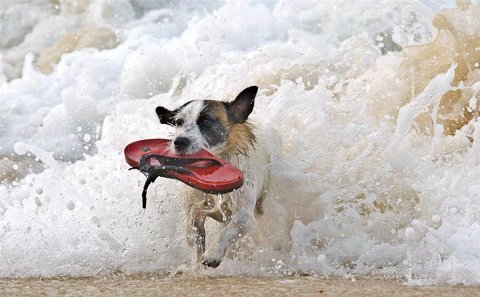 Собака нашла в море сандалий