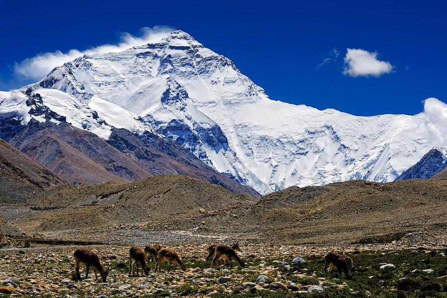 Эверест: