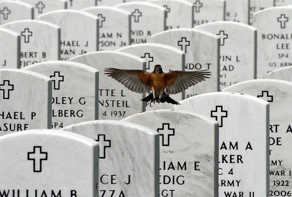 Кладбище и голубь