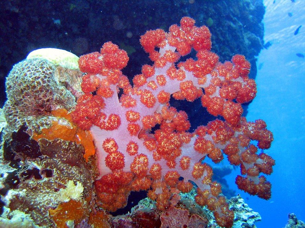 Коралловый риф: