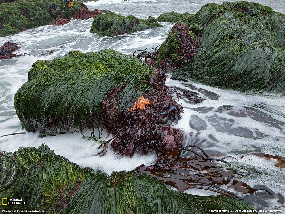 Трава, водоросли и морская звезда