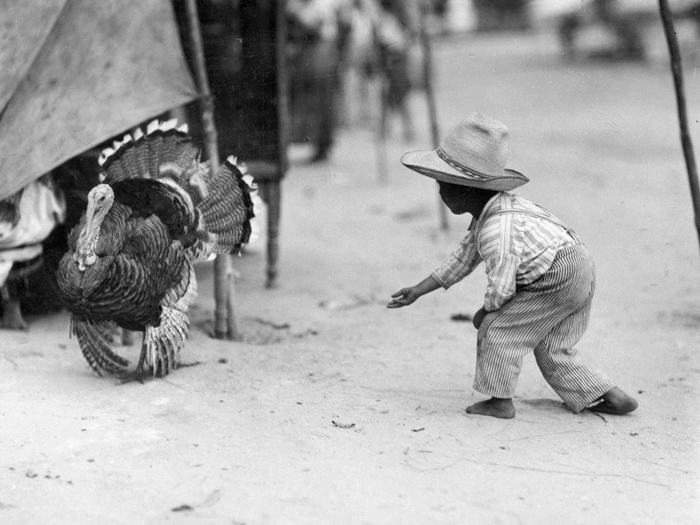 Мальчик и индюк, Турция