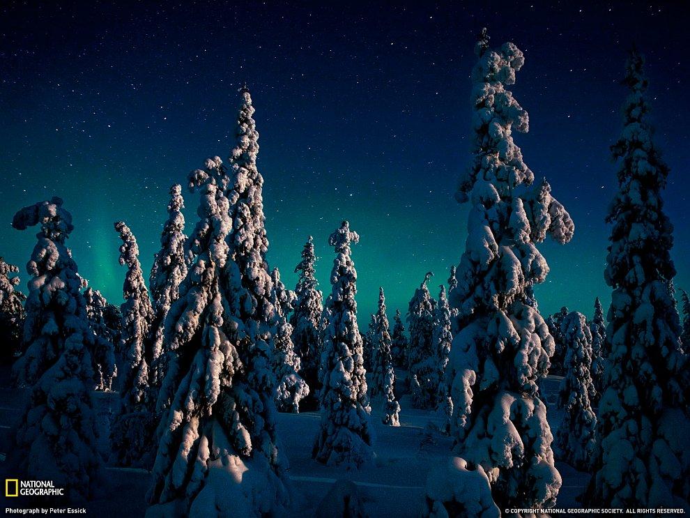 Ели и северное сияние, Финляндия