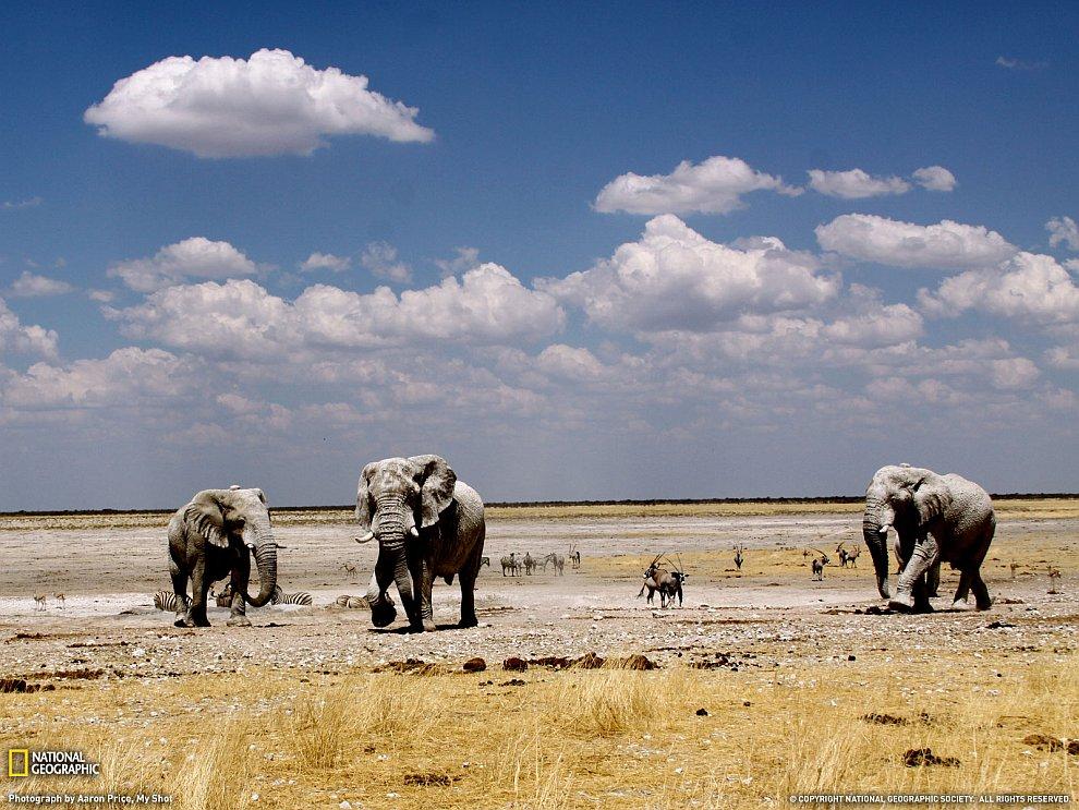 Хозяева Намибии