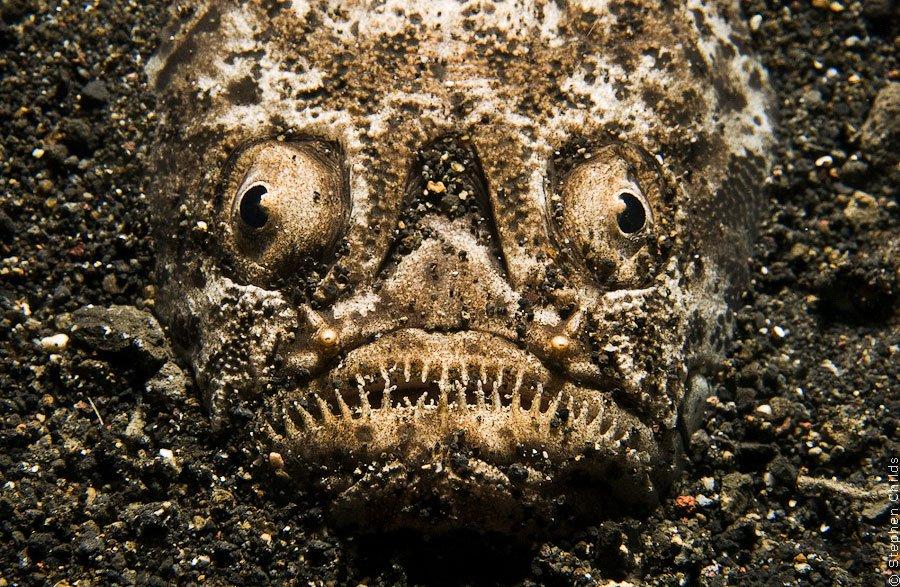 Подводный зоопарк удивительных существ на о. Сулавеси, Индонезия