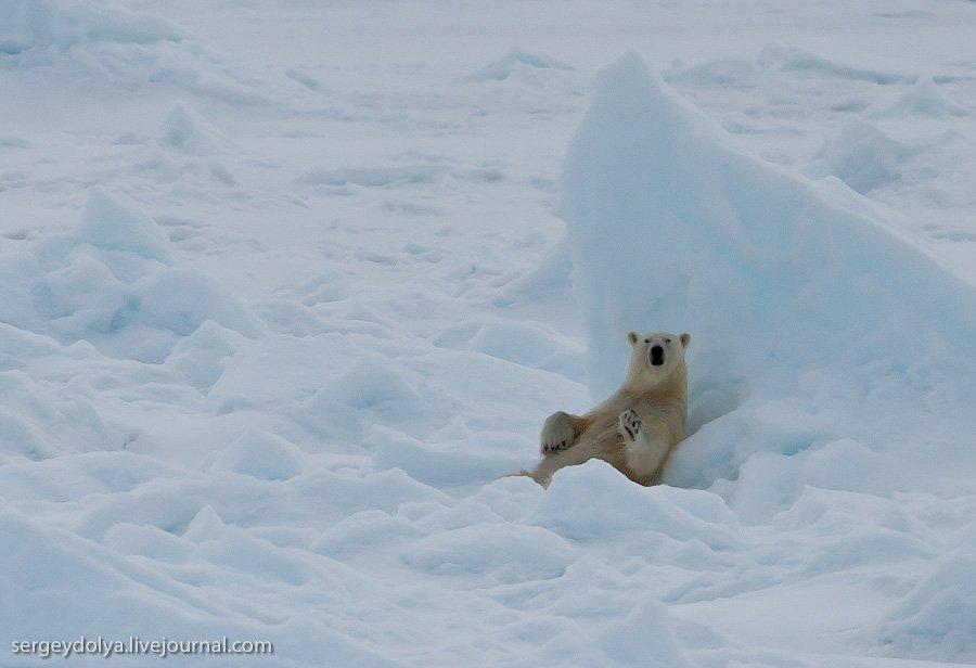 Путешествие на Северный полюс