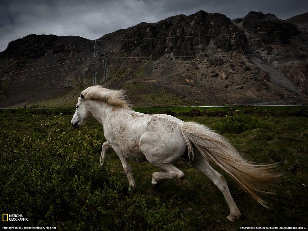 Бегущая лошадь