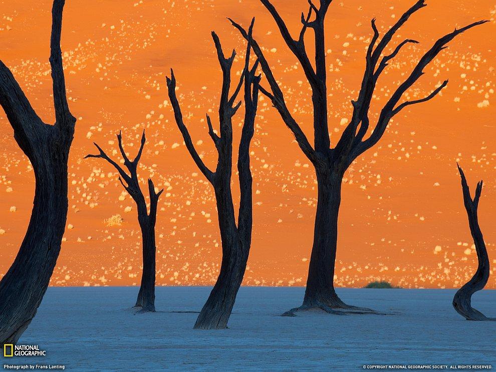Деревья верблюжьей акации, Намибия