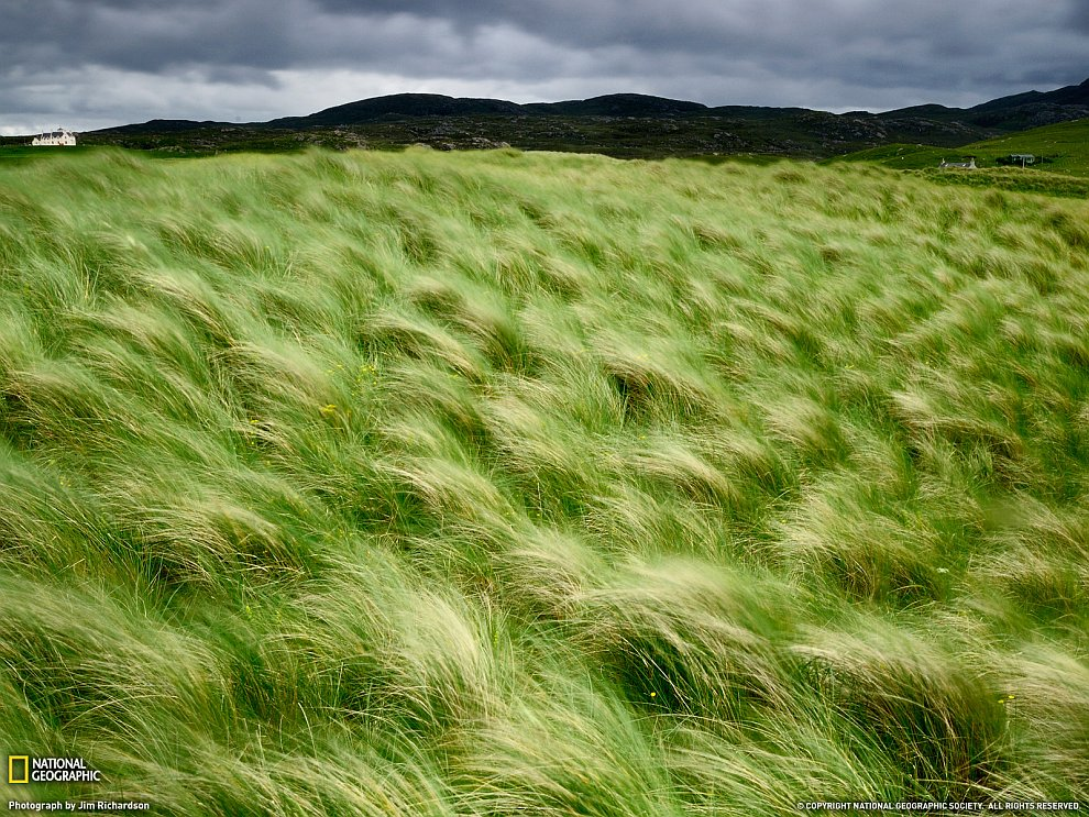 Трава на берегу, Шотландия