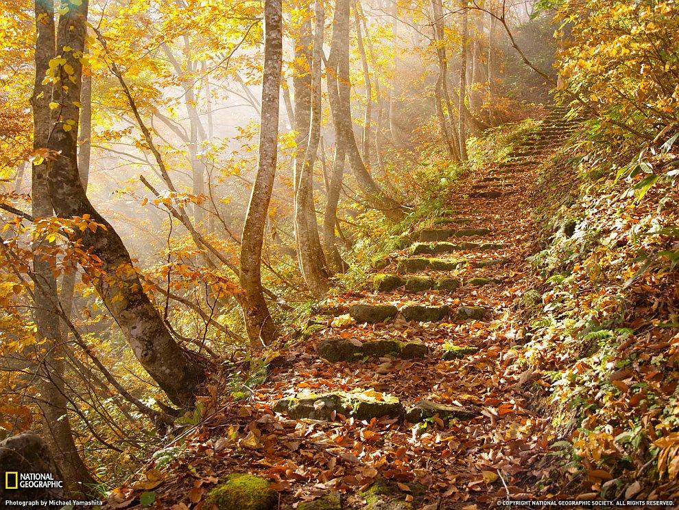 Осенние листья, Япония