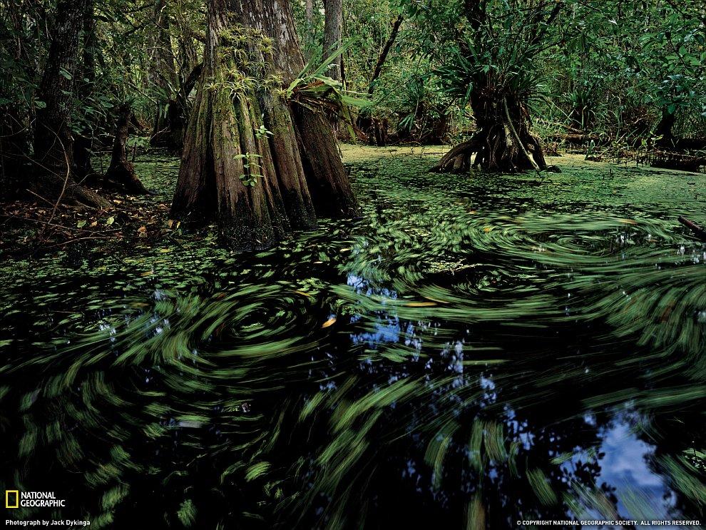 Большой кипарисовый заповедник во Флориде