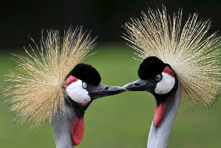 Животные в фотографиях за неделю