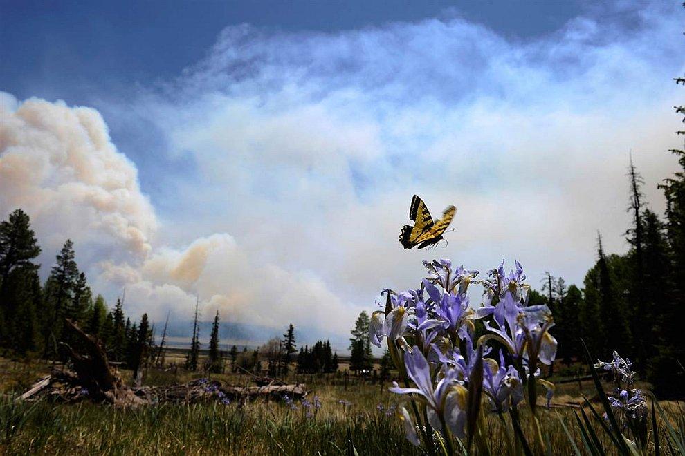 В штате Аризона продолжаются пожары